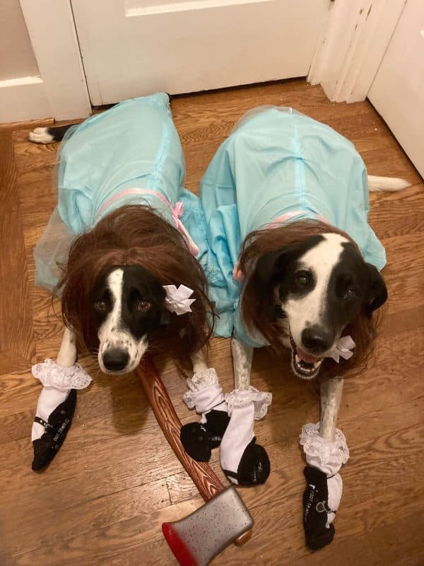 Two adorable dogs for Halloween contest