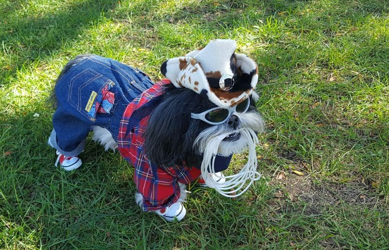 cowboy dog in photo contest for Halloween