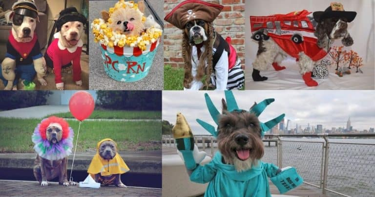 Dog Halloween Photo Contest 2020