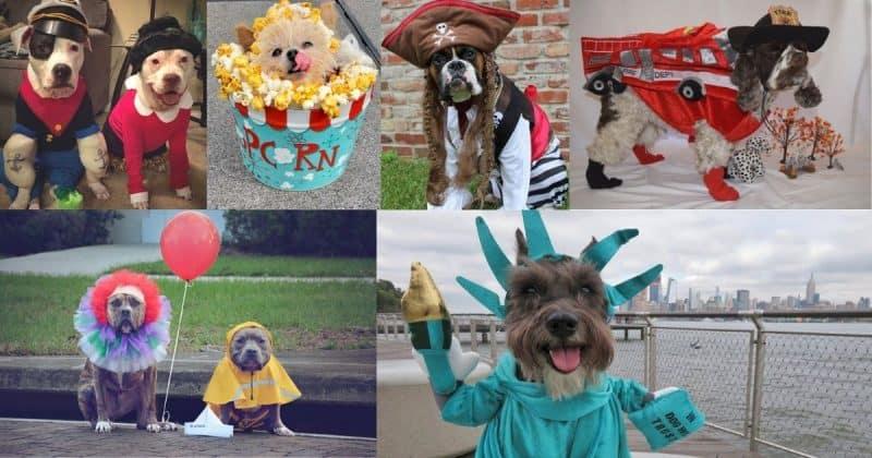 Dog Halloween photo contest