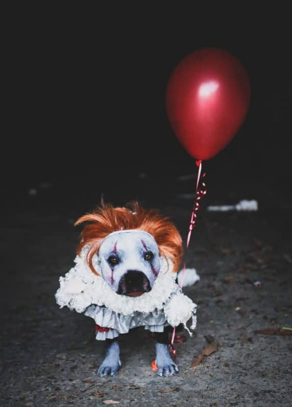Dog as Pennywise for Halloween