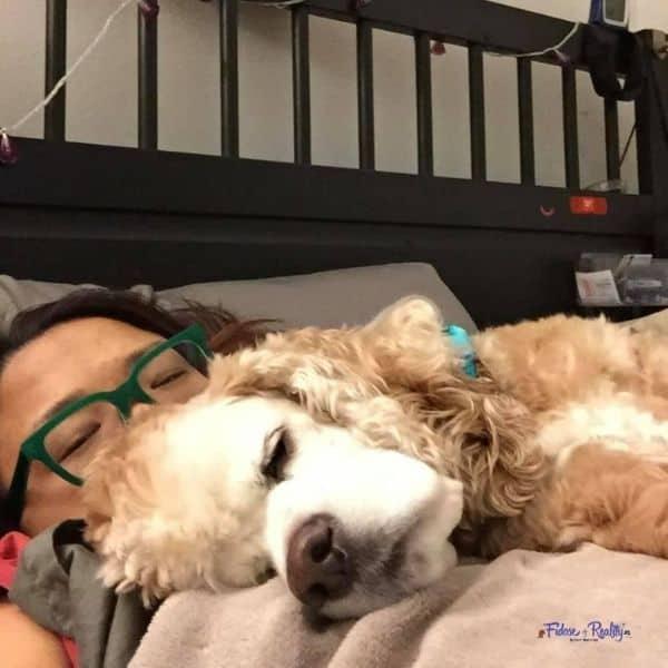 do cocker spaniels like to cuddle