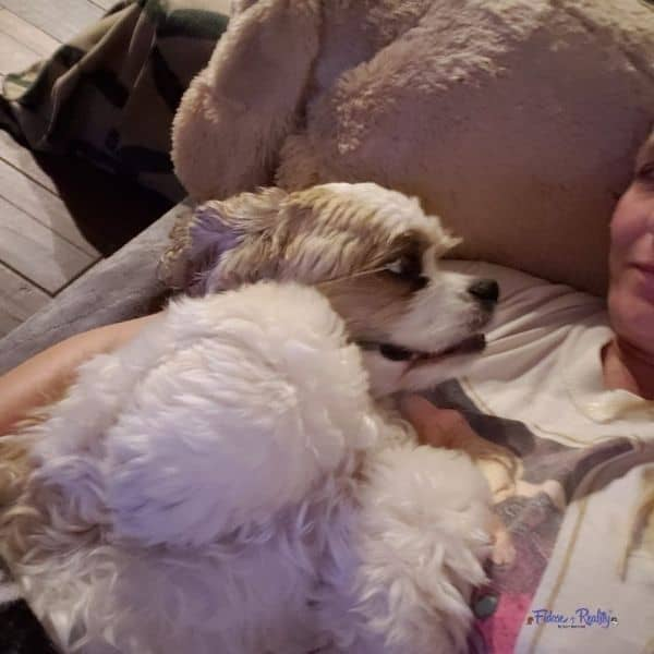 cocker spaniel cuddles with his mom