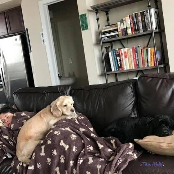 do cockers like to snuggle