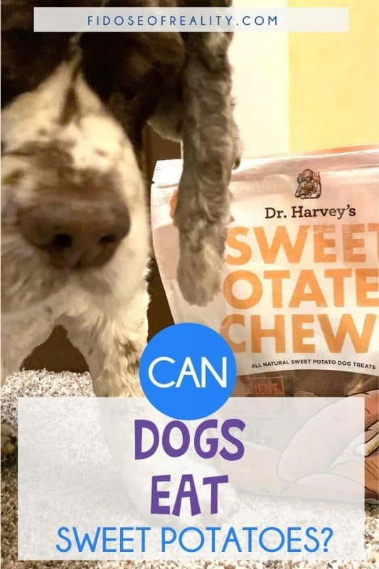 are sweet potatoes safe for dogs