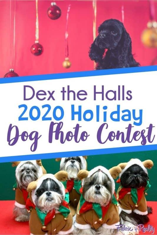 holiday dog photo contest