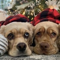 holiday dog photo contest