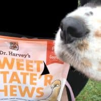 can dogs safely eat sweet potatoes
