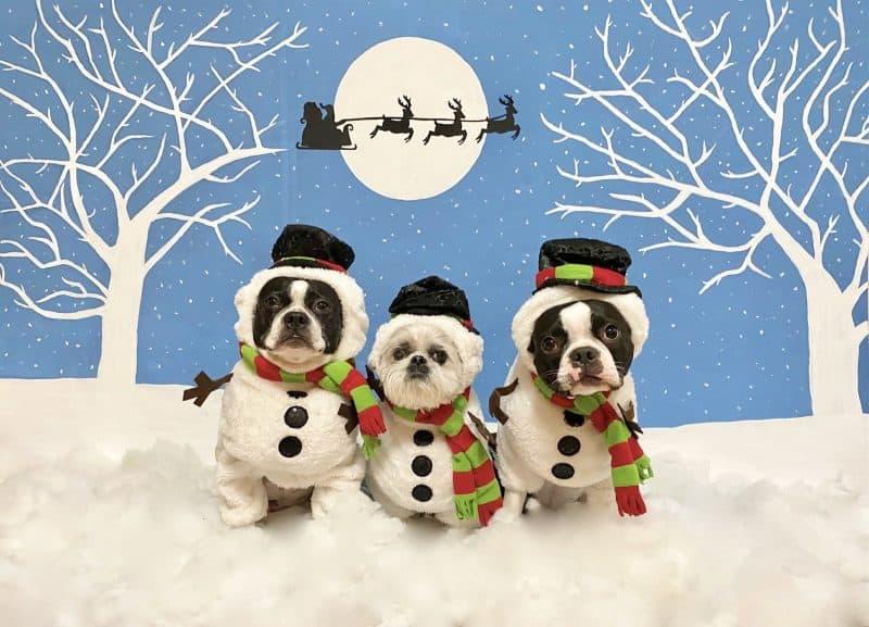 snowmen dogs photo contest winner