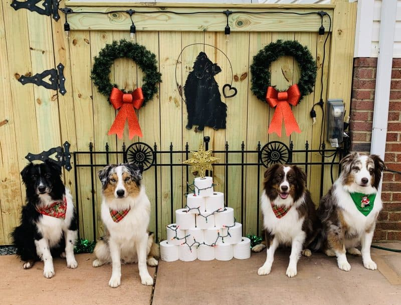 cute dog photo contest winners