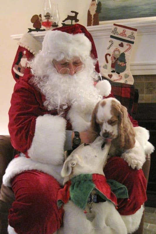 kissing santa cute dog photo contest winners