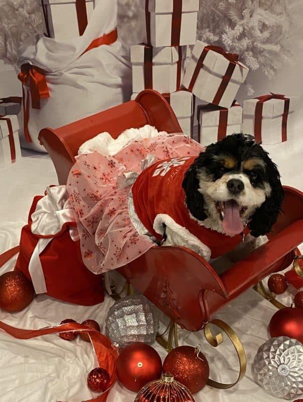 christmas photo contest winner