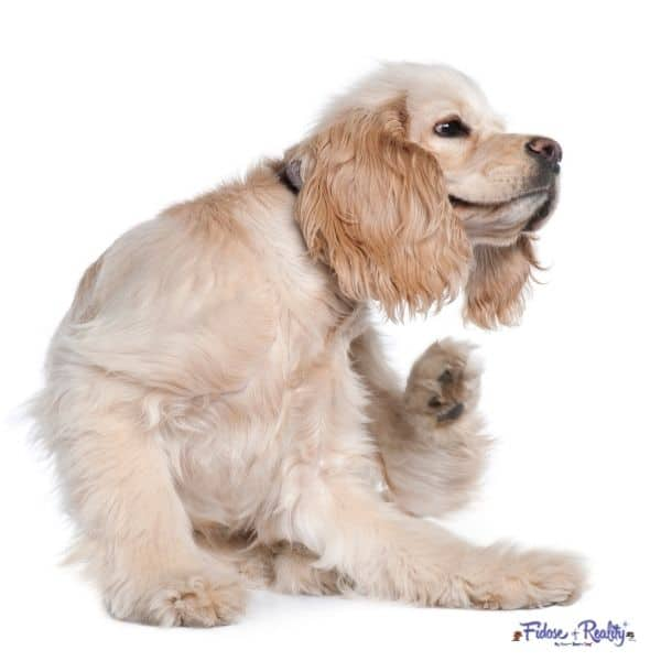 how to help cocker spaniel allergies