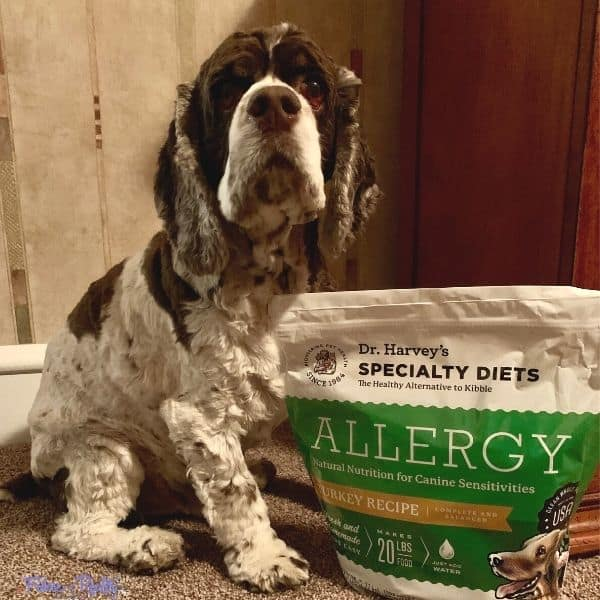 Cocker Spaniel with Allergy food