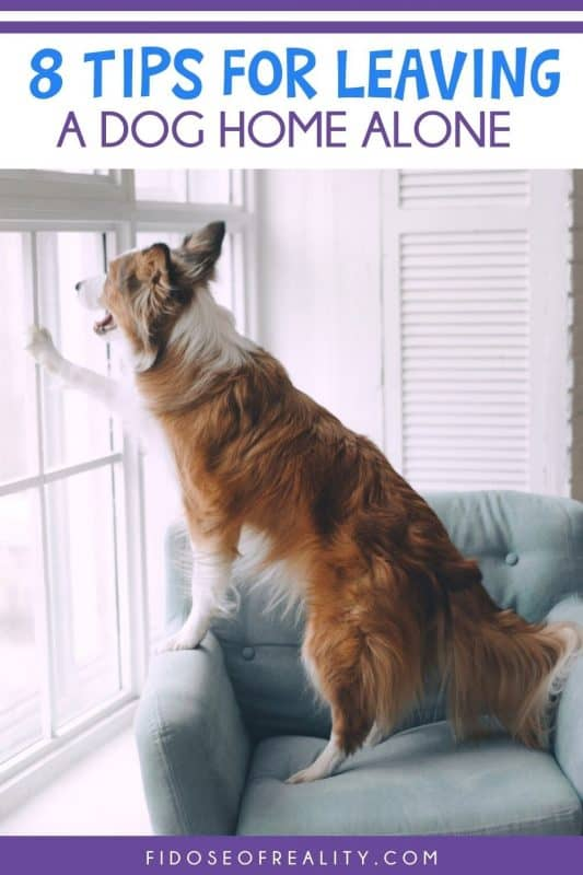 tips for leaving a dog home alone