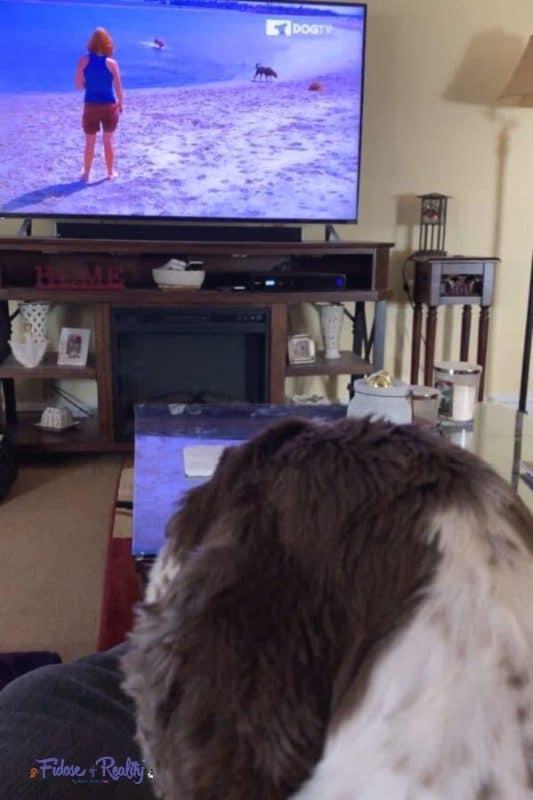 dog home alone watching dogtv