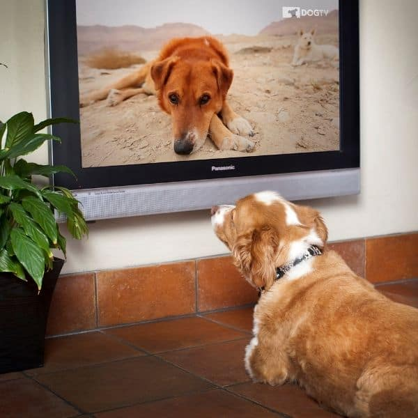 leaving a dog home alone with dogtv