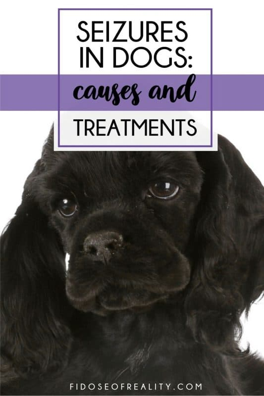 seizures in dogs causes