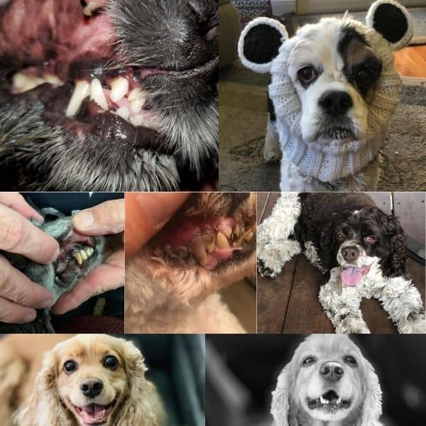 dogs who had dental issues
