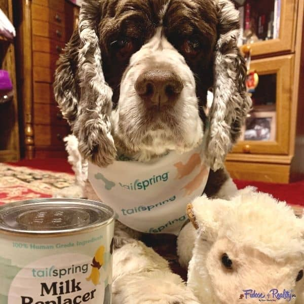 best milk replacer for newborn puppies