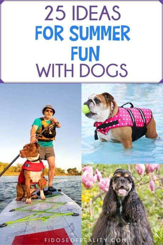 25 ideas for summer fun with your dog
