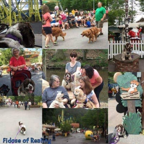 dog friendly amusement park in warmer weather
