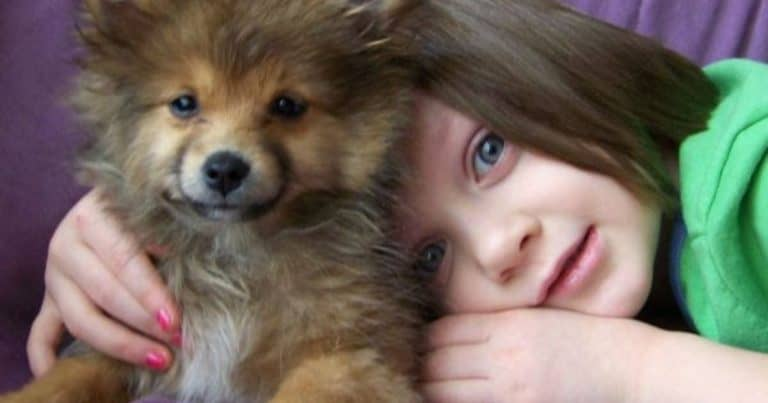 How To Teach Respect For Dogs To Children