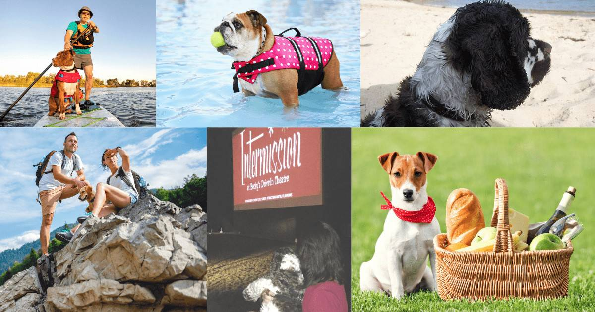summer activities to do with a dog