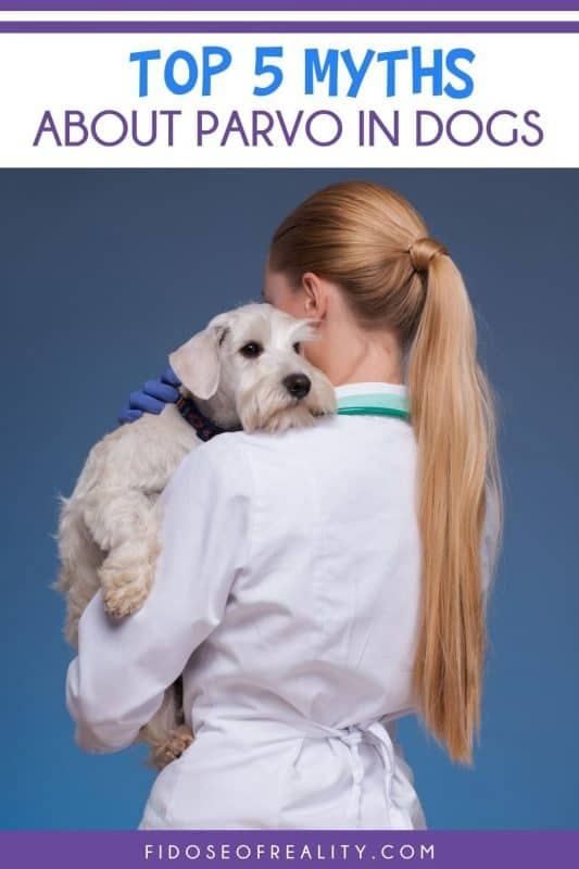 myths about parvovirus in dogs