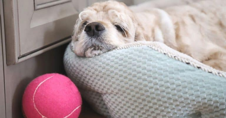 Best Products For A Dog Afraid Of Loud Noises