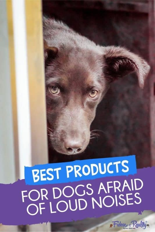 best products for dog with noise phobia