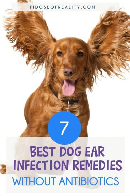 Best Dog Ear Infection Remedies Without Antibiotics