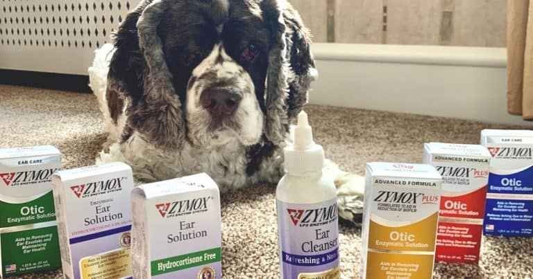 7 Best Dog Ear Infection Remedies Without Antibiotics