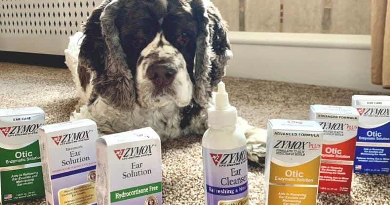 dog with products to prevent ear infections