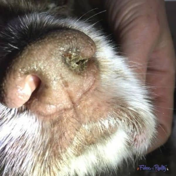 Help a dog with kennel cough by taking him to a veterinarian first.