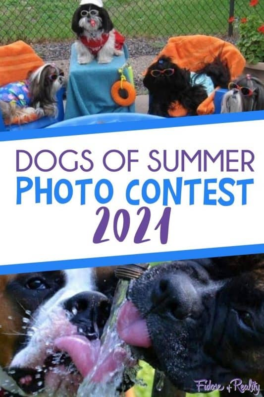 Dogs of Summer photo contest