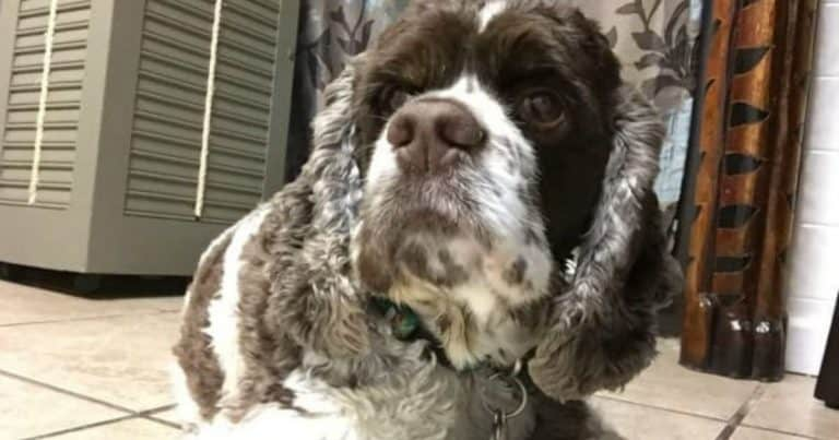 Pro Tips To Help A Dog With Kennel Cough