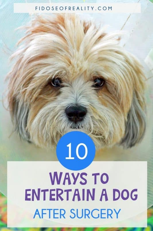 how to entertain your dog after surgery