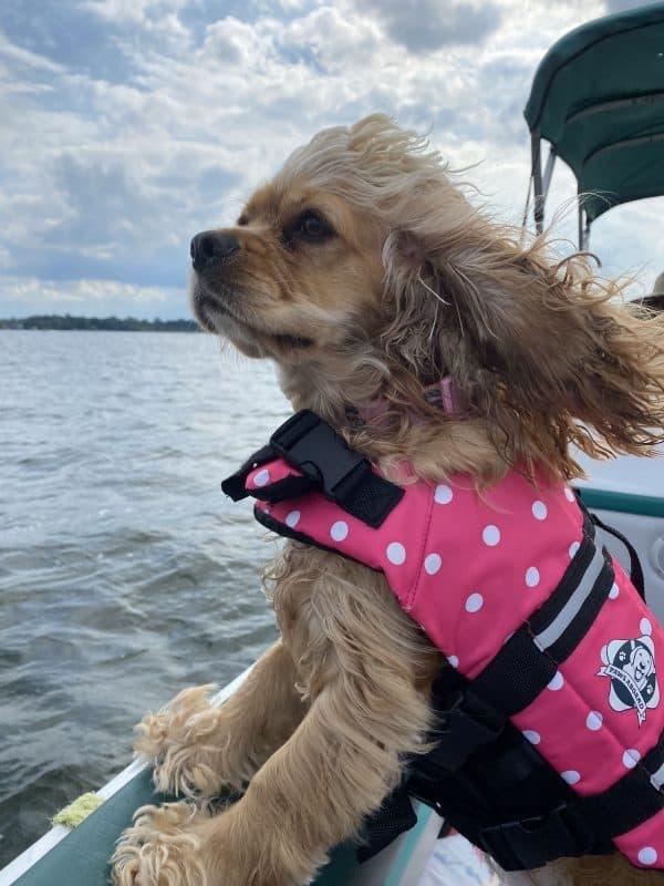 dogs of summer photo contest winner