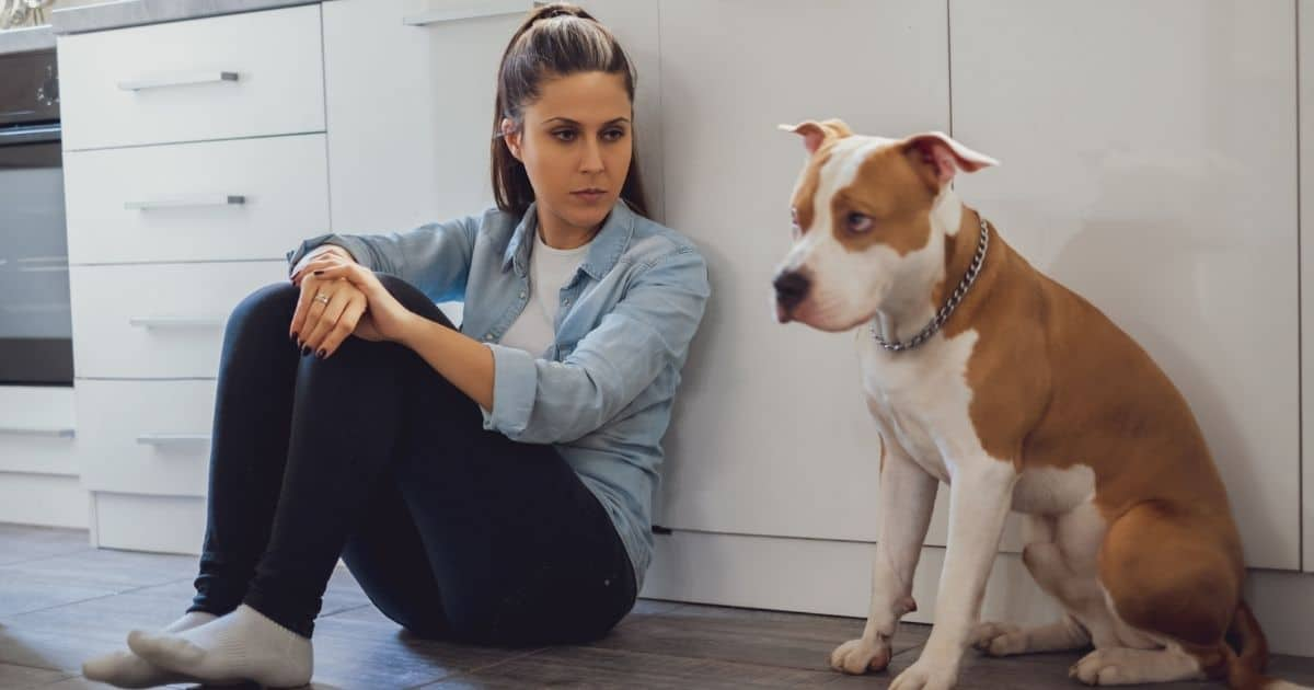 Do dogs hold a grudge after they are hurt?