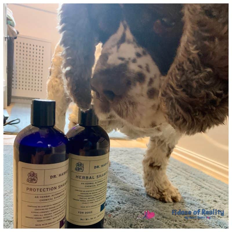 My dog uses herbal canine shampoo to stay healthy and clean.
