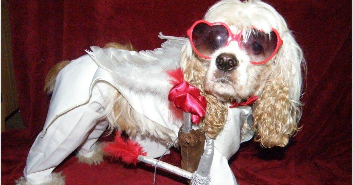 dog dressed as cupid ready to fall in love
