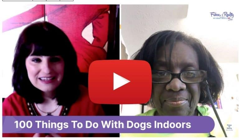 Do positive reinforcement training indoors with your dog