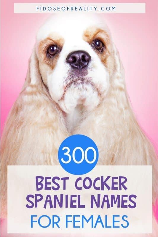 300 best female Cocker Spaniel dog names