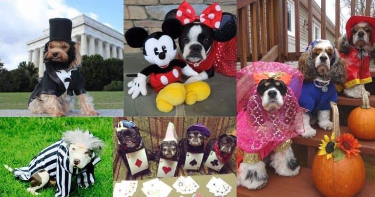 Halloween Dog Photo Contest 2021